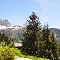 La Golèze ## charmant 3 pièces au pied de la piste de ski